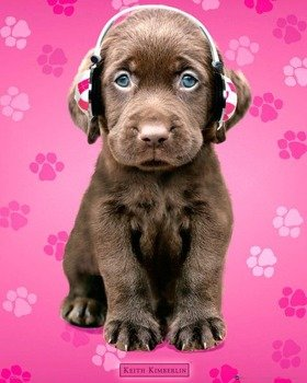 plakat KEITH KIMBERLIN - CHOCOLATE LABS HEADPHONES
