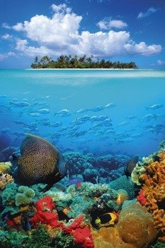 plakat TROPICAL UNDERWATER